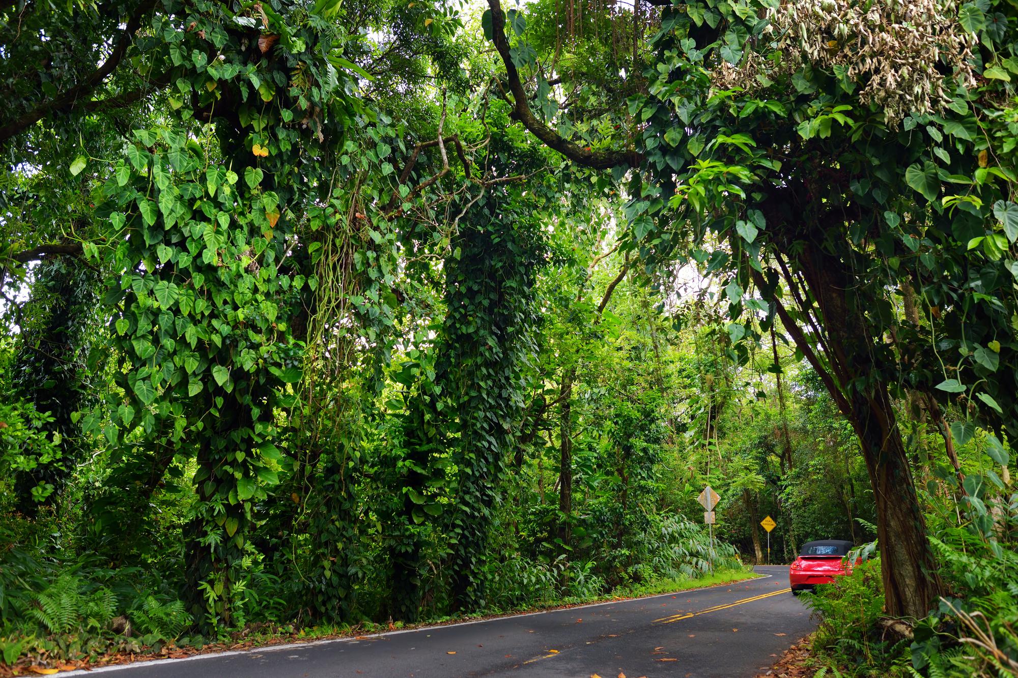 Hana Highway road